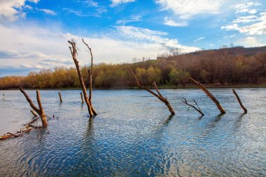 trees in the river water after inundation