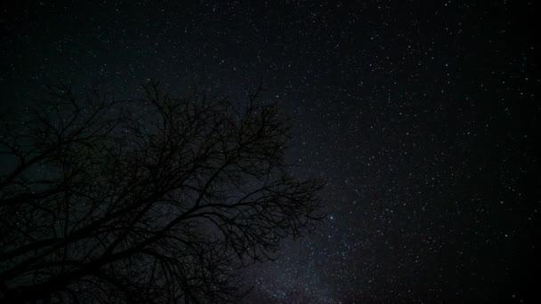 Albero Solitario Sotto Il Cielo Stellato 4k Timelapse Video Stock