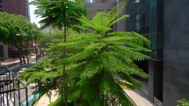 Green fern tree near office building ,exterior. Glass windows on concrete facade with green tree and city traffic. Daytime outside scene setup. 4K