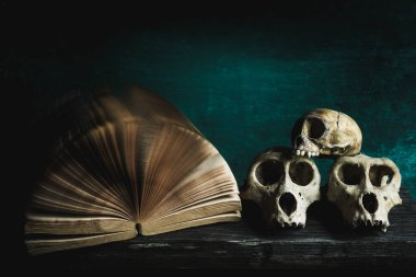 Still life with skull and old book