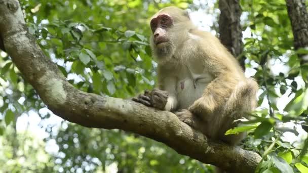 anya majom és baba majom ül egy faágon.