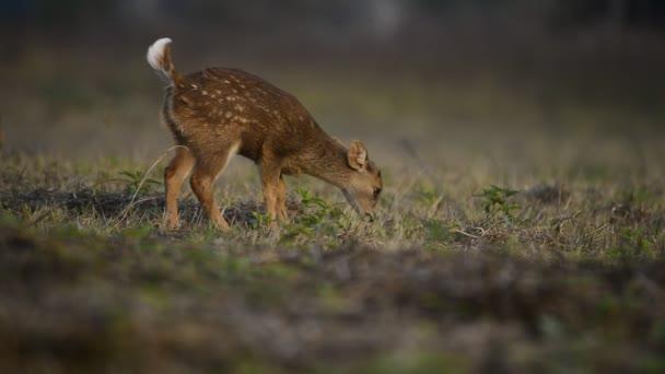 v přírodě, zvířata, volně žijící zvěř, volně žijící zvěř, příroda pozadí Asie Thajsko