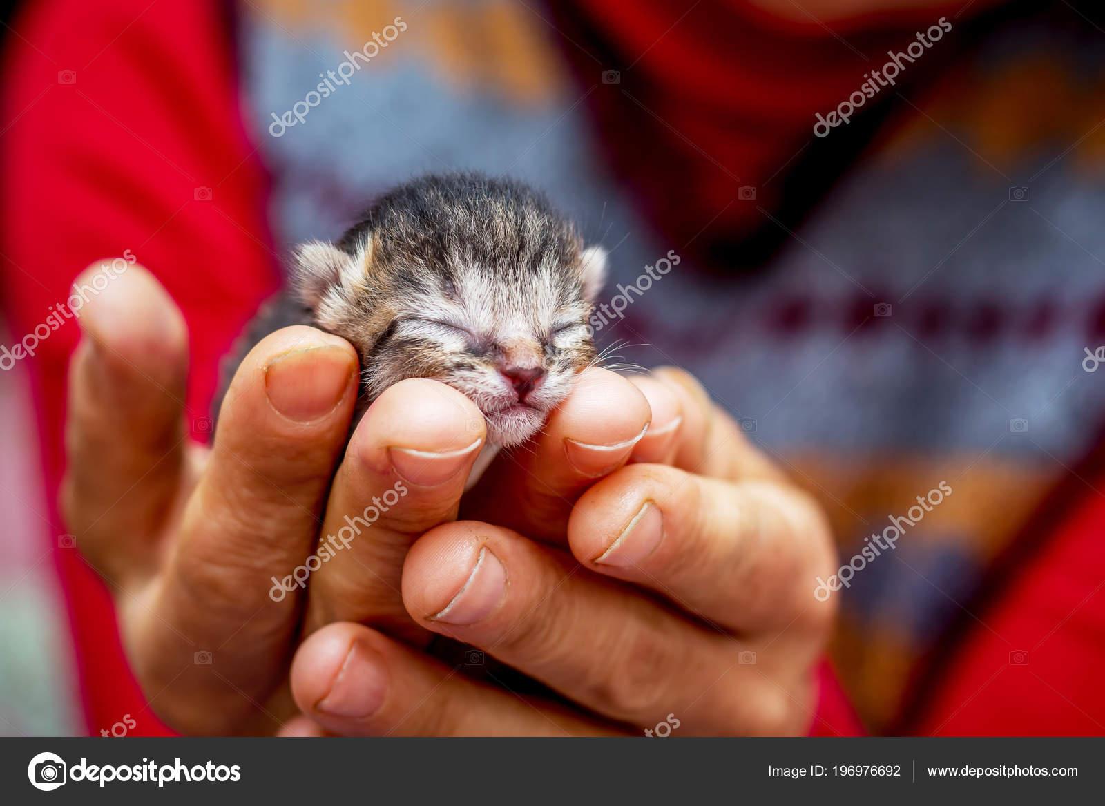 lil černé dívky kočička