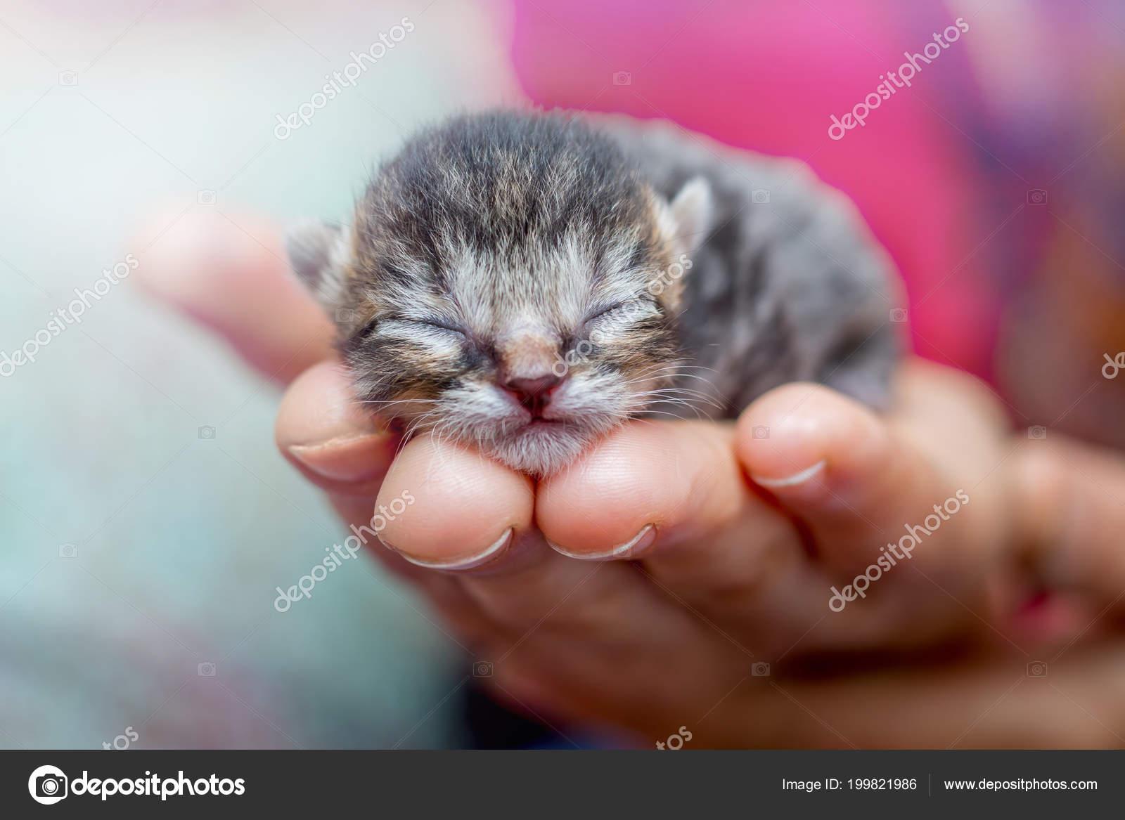 Malá žena kočička