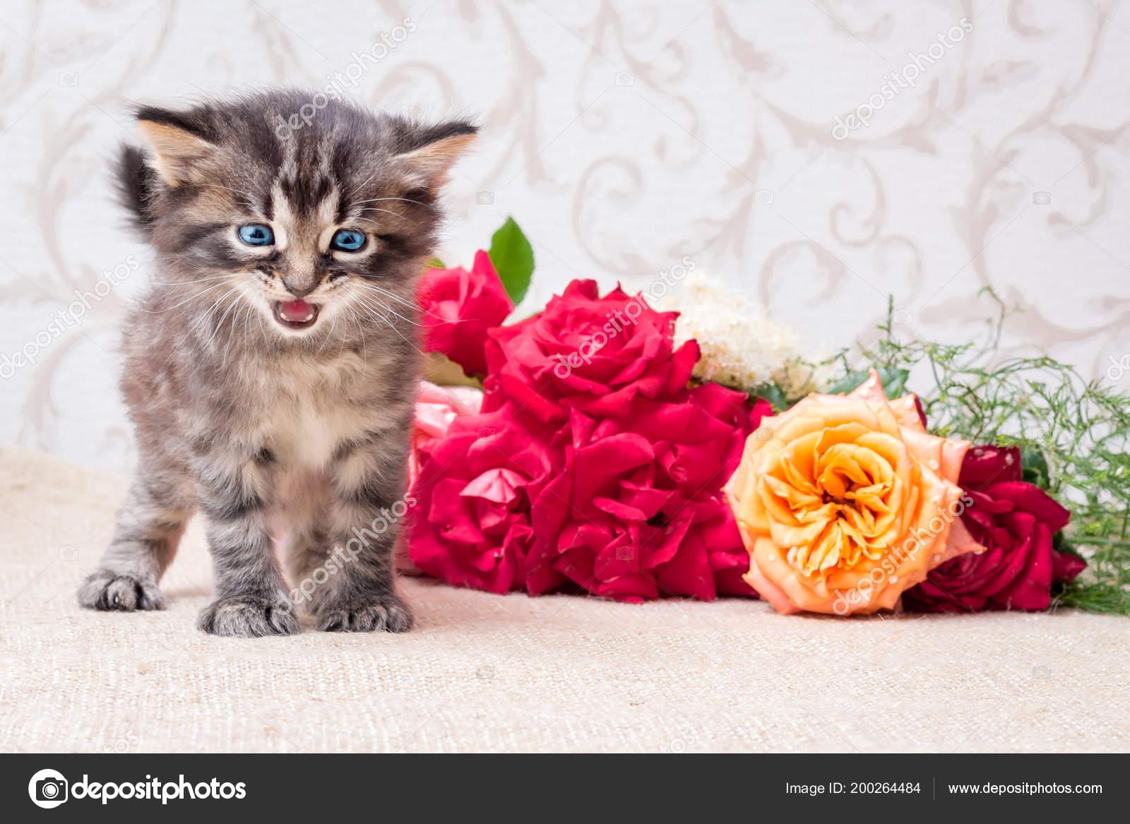 Petit Chaton Espiègle Près Bouquet Fleurs Joyeux Anniversaire