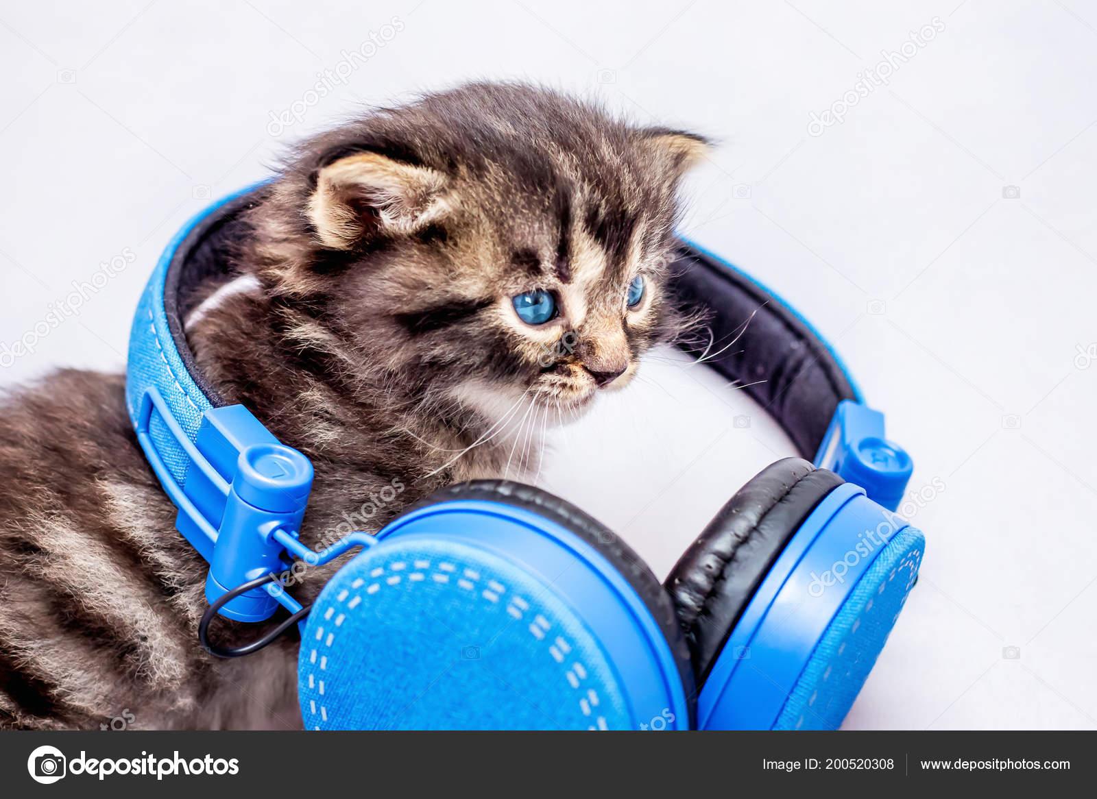 Гифка музыка музыкальный котик гиф картинка, скачать анимированный.