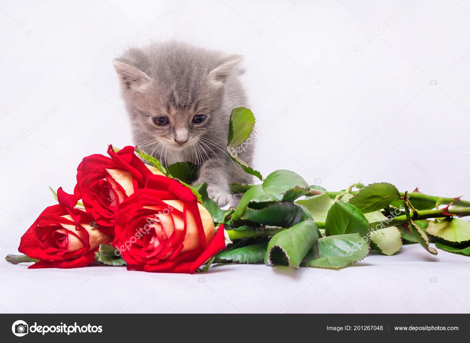 Поздравления подарок котенок фото 466