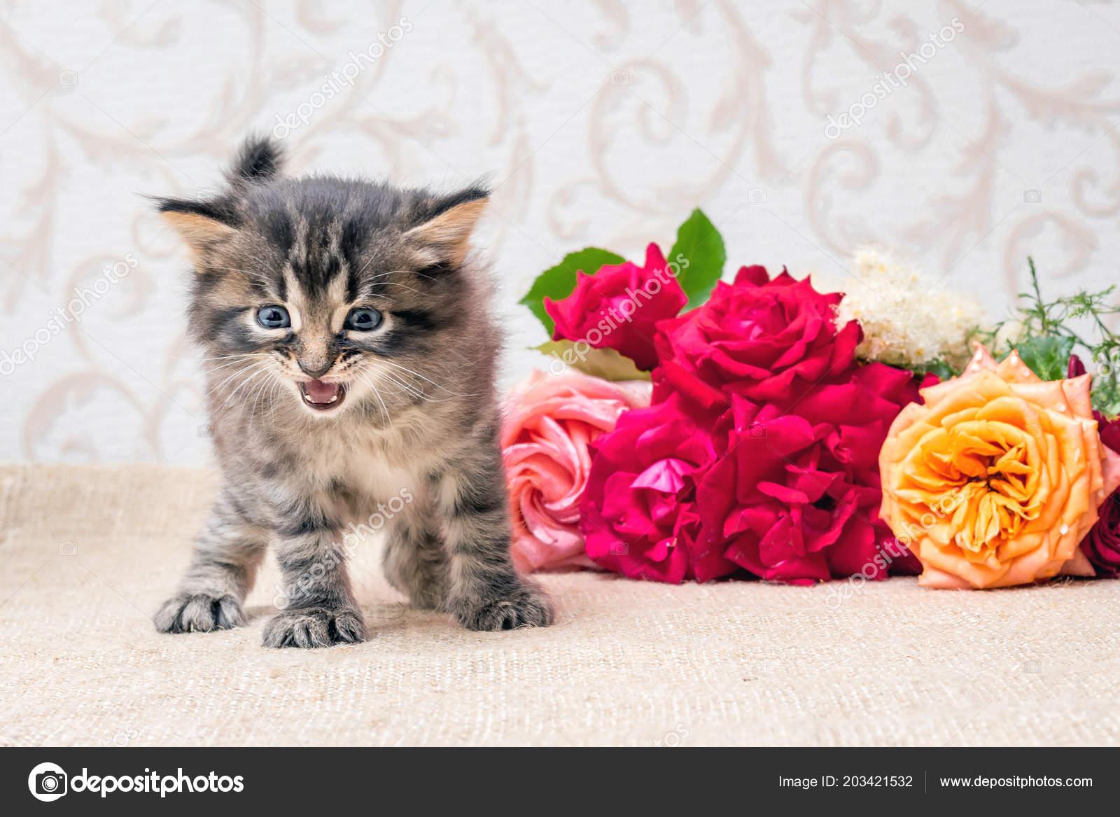 Поздравления подарок котенок фото 938
