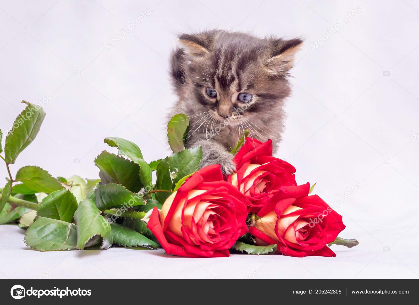 Поздравления подарок котенок фото 50