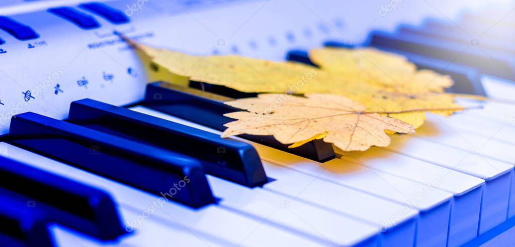 Yellow maple leaves on the keys of the piano. Autumn blues