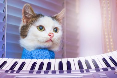 White cat in a blue scarf near piano . Concert of Classical Music. Advertising of musical instruments