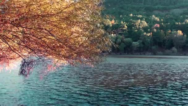 1920x1080 25 Fps Very Nice Autumn Tree Leaf View on Lake Video.