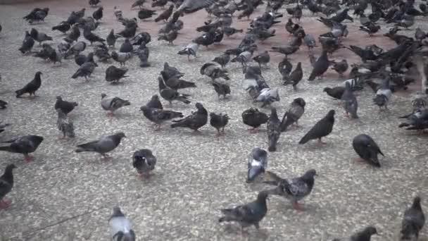 Hejno holubů létajících a kráčejících po betonové podlaze