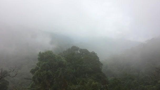 Zobrazit šířku mlha v horském lese