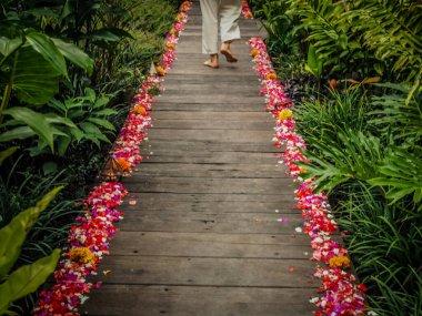 path through a tropical park