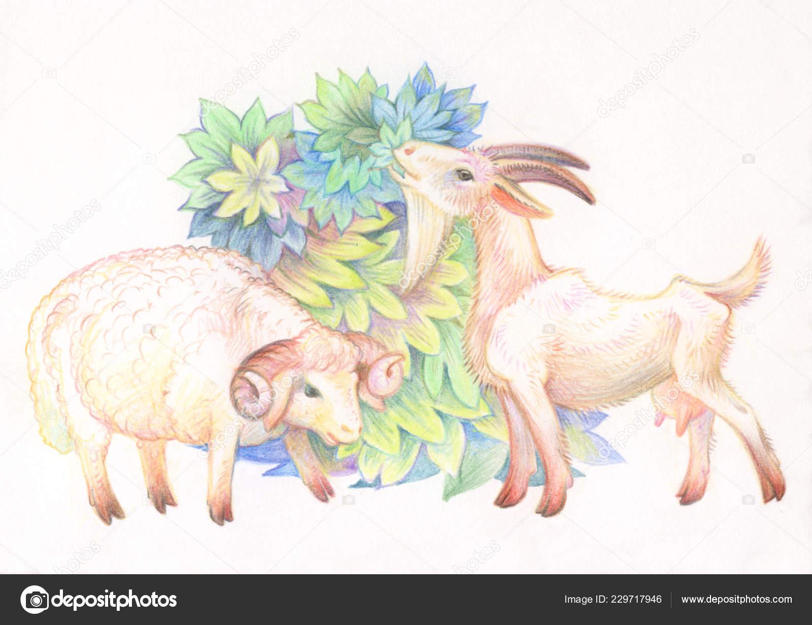 Disegno Matita Illustrazione Bambini Immagine Animali Con Matite