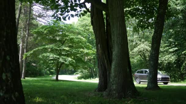 Timelapse of cars driving through nature park path