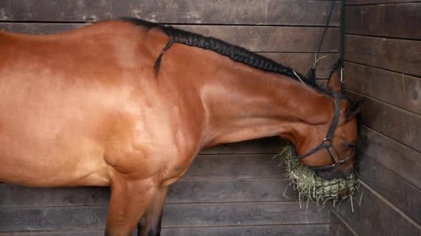 Koňovi jelenicové jíst seno v hospodářství stánek na ranči