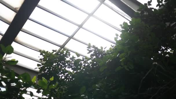 Zavedení shot stropu uvnitř přírody konzervatoře