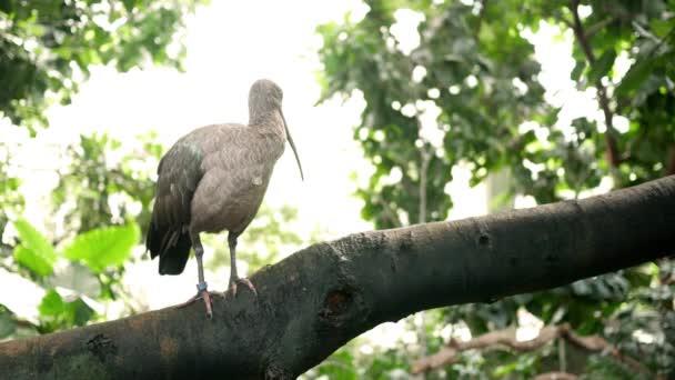 Chiuda in su di un uccello raro in un giungla esotica baldacchino