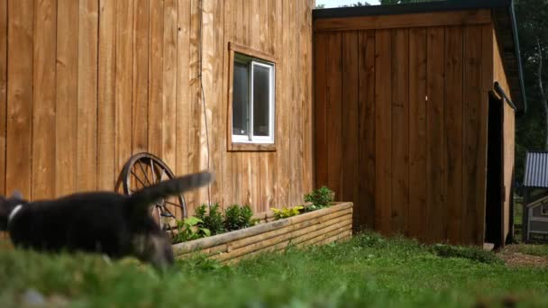 An establishing shot of a wooden barn with cat running beside frame