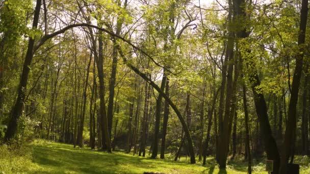 Herbstwaldserie - Waldlichtung im Frühherbst