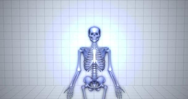 Zvětšování - koncept lidské anatomie - kostra lebky animace