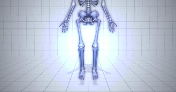 Zvětšení na kostru - anatomie člověka koncept - falangy animace