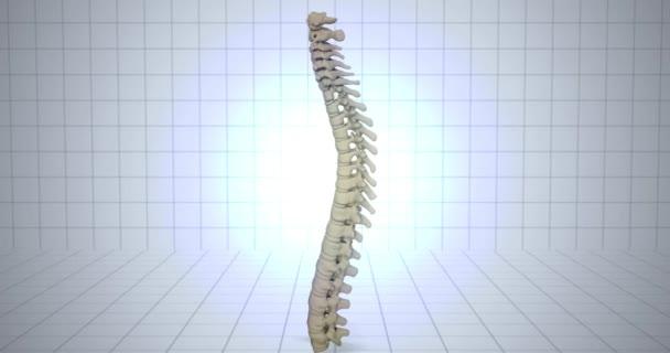 Zvětšení na kostru - anatomie člověka koncept - bolesti v páteři animaci