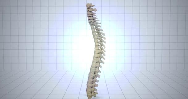 Lo zoom a scheletro - concetto di anatomia umana - animazione della colonna vertebrale