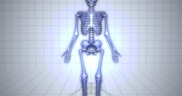 Zooming to skeleton - human anatomy concept - Pelvis Skeleton animation