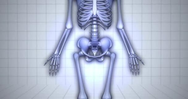 3D anatomie kostry vizualizace - distální falangy