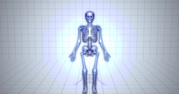 3D anatomie kostry vizualizace - Carpals