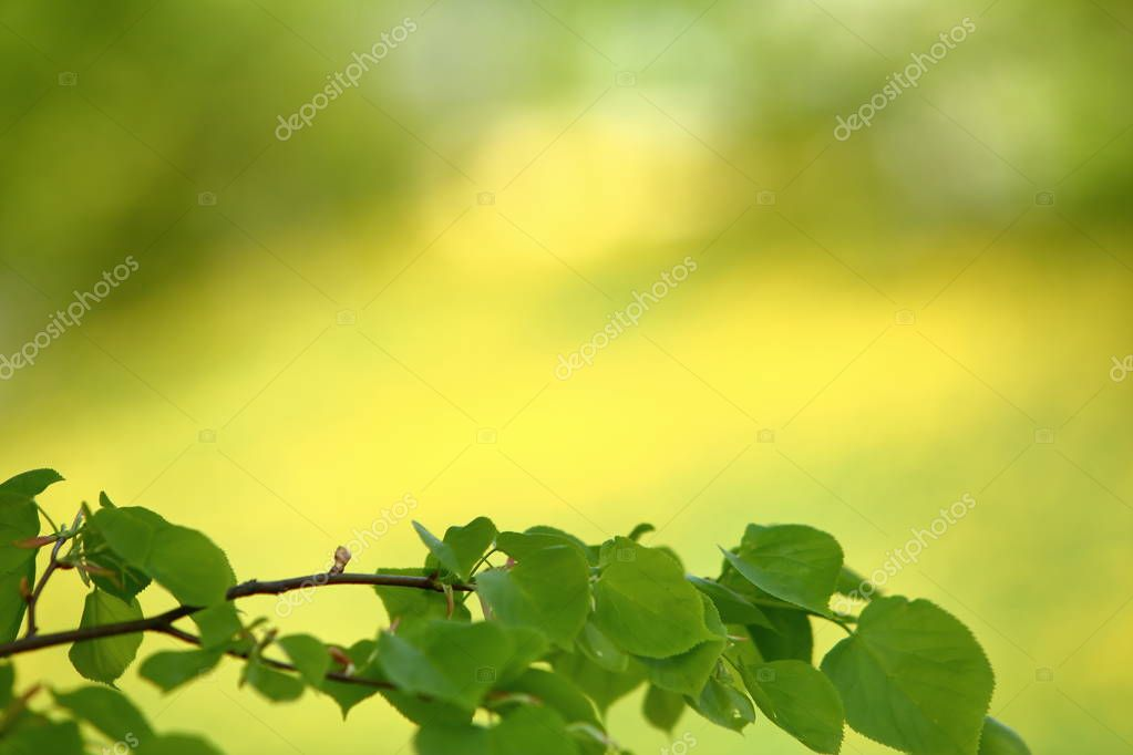 Young birch leaves on a background of yellow-green meadow with a photo blur effect.