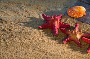 Several starfish frozen on a sandy beach. Sunny coast. Sea beach.