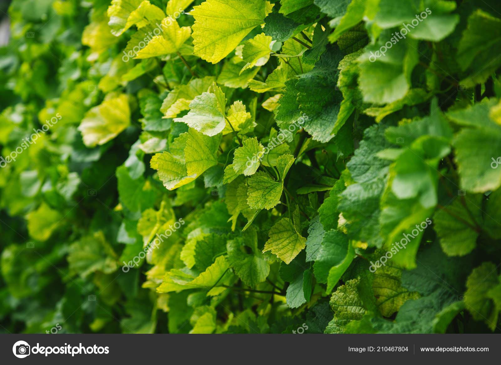 Imagen Fotograma Completo Viña Sale Fondo — Foto de stock ...
