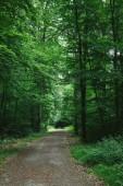 Fotografie cesta v zelené krásném lese, Würzburg, Německo