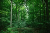 Fotografie beautiful leafy trees in forest in Wurzburg, Germany