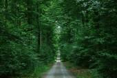silnice v zelené krásném lese, Würzburg, Německo