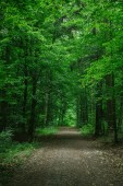 rural road in green beautiful forest in Wurzburg, Germany