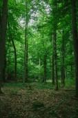 cesta v zelené krásném lese v Německu v létě