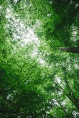 low angle view of green trees in forest in Wurzburg, Germany