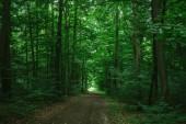 Fotografie path in green dark forest in Wurzburg, Germany