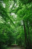 cesta v krásném lese, stromy se zelenými listy v Würzburg, Německo