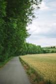 Straße zwischen Wald und Feld in Würzburg
