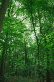 Fotografie trees with green leaves in forest in Wurzburg, Germany
