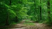 Fotografia percorso in foresta verde bella a Wurzburg, Germania