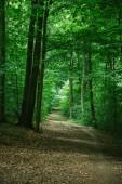 Fotografie silnice v zelené krásném lese, Würzburg, Německo