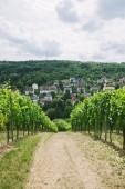 Cesta do vesnice a vinice na stranách v Würzburg, Německo