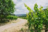 road and vineyard with trees on sides in Wurzburg, Germany